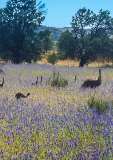 The Ikara Flinders Ranges National Park is one of the best places to visit in Australia. Click to read more about this beautiful region to visit in South Australia.