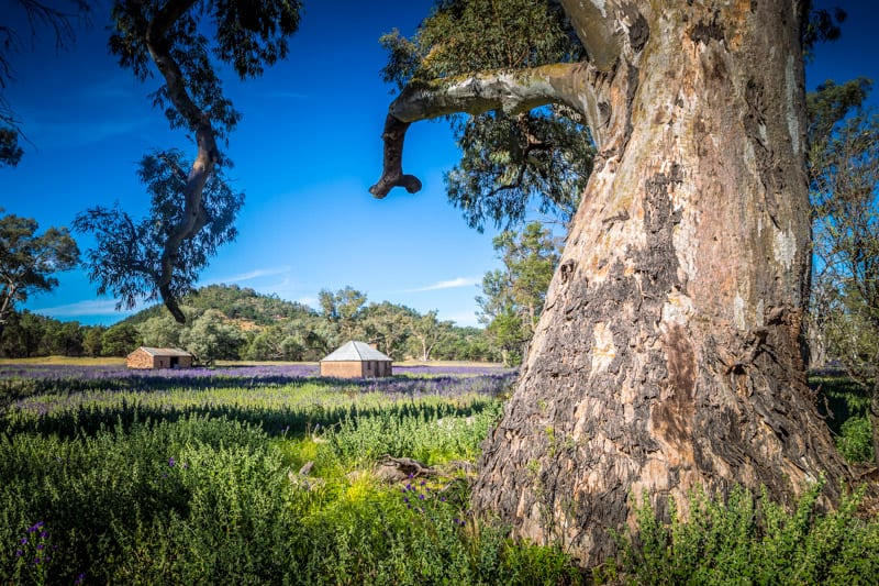 Visiting the historic Wilpena Station is one of the best things to do in the Ikara Flinders Ranges National Park. Click to read more about this beautiful region to visit in South Australia.
