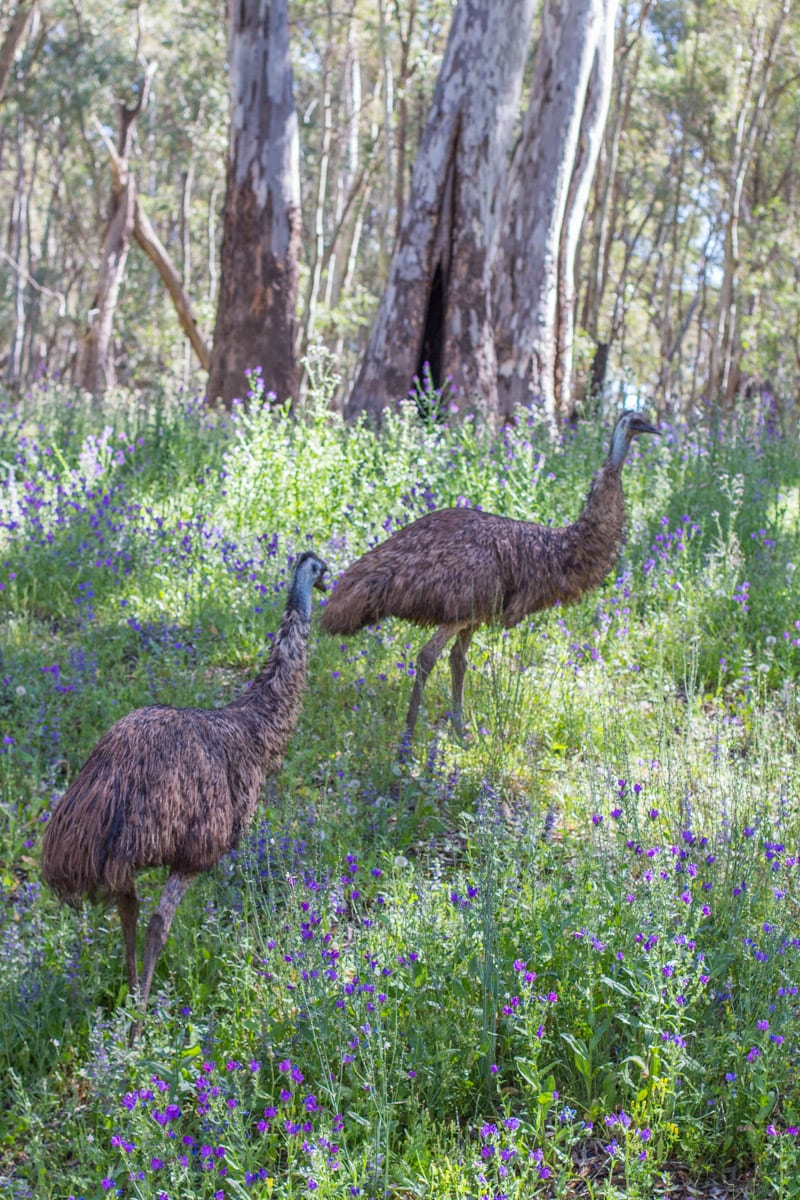 a visit to flinders ranges national park ancient ikara y