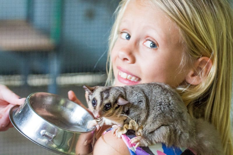 Get up close with wildlife at Hartley's Crocodile Adventures in Port Douglas, Queensland, Australia