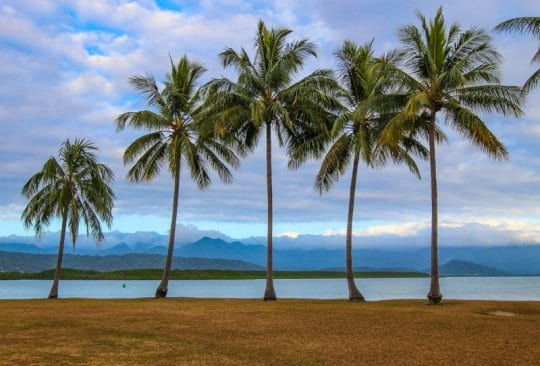 See the Palm trees at Rex Smeal Park - one of the best things to do in Port Douglas, Queensland, Australia