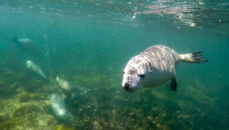 wimming with the Australian sea lions in Port Lincoln and is a must have experience on your road trip with kids in South Australia. Click to read more tips on things to do on the Eyre Peninsula