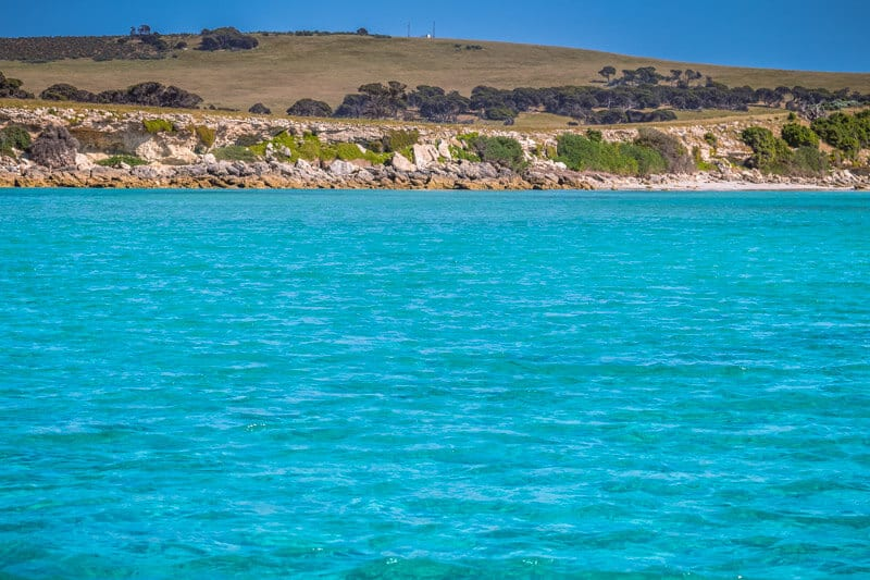 Kangaroo Island Marine Adventures is one of the best tours you can do on Kangaroo Island. You can swim with dolphins. Click to read more tips