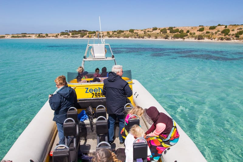 Marine Adventures Kangaroo Island is one of the best tours you can do on Kangaroo Island. You can swim with dolphins. Click to read more tips