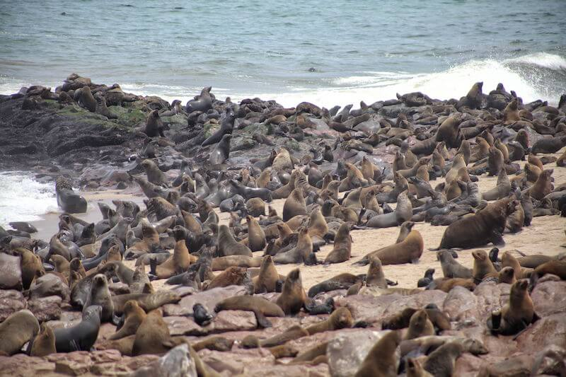 Cape Cross seal colony on the Skeleton Coast of Namibia, Africa