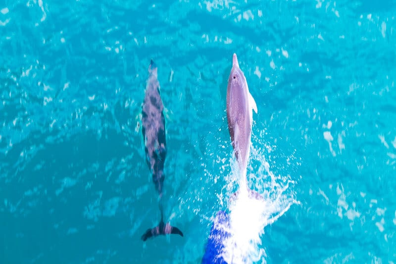 Spotting dolphins on the ferry to kangaroo Island in South Australia