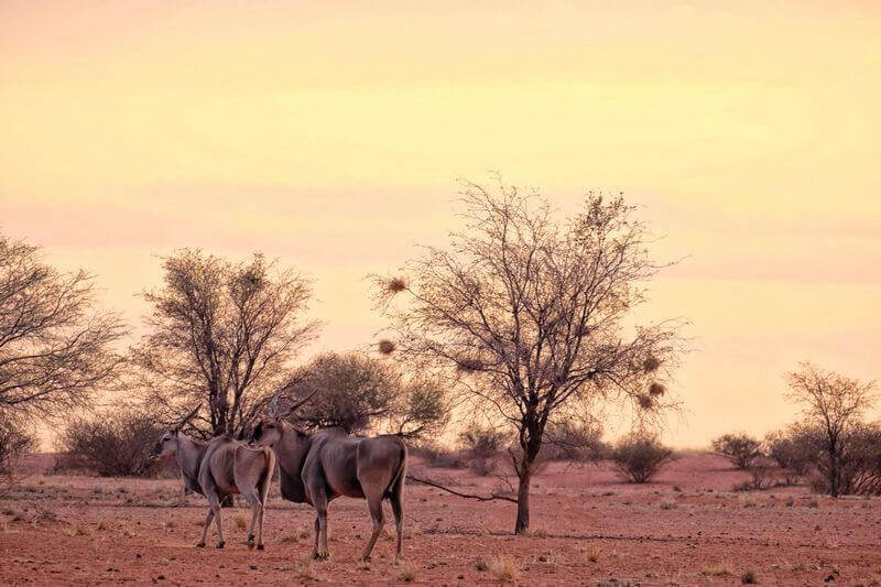 The Kalahari is an inhospitable environment, but you'll still see lots of animals and it's one of the best things to do in Botswana