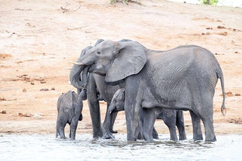 Top 5 Things to do in Botswana to experience the natural beauty