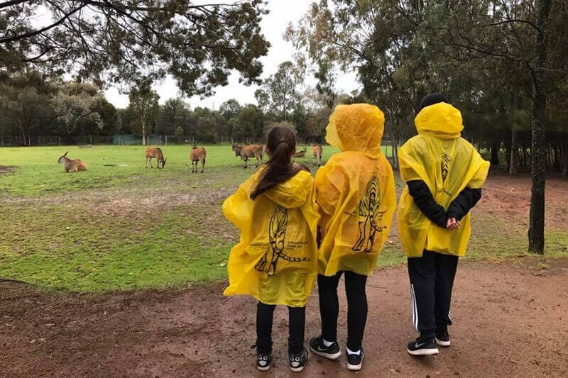 Visiting the Taronga Western Plains Zoo is one of the best things to do in Dubbo with kids