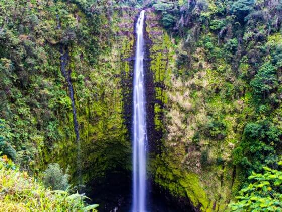 Akaka Falls - things to do on the Big Island of Hawaii