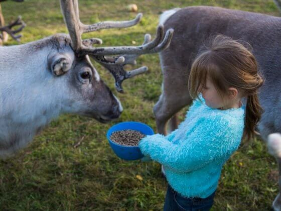 Feeding reindeer was another fun activity in Finland for the kids.