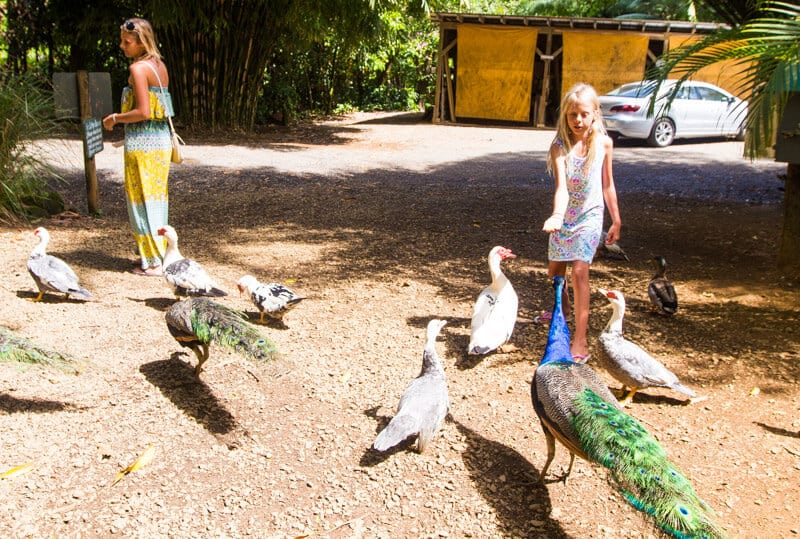 Garden of Eden bird feeding - one of the stops along the Road to Hana drive in Maui, Hawaii