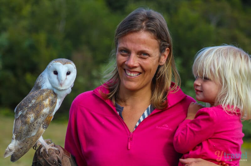 Birds of Prey Show at O'Reilly's Rainforest Retreat in the Gold Coast Hinterland of Queensland, Australia