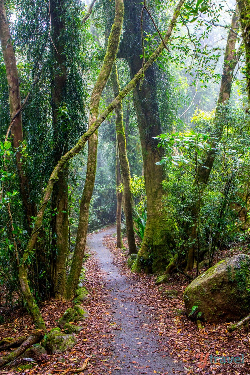 Twin Falls Walk, Springbrook National Park, Gold Coast Hinterland, Queensland, Australia