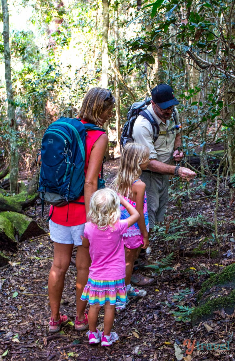 Nature walk at Binna Burra Lodge, Gold Coast Hinterland, Queensland, Australia