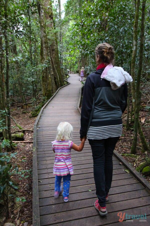 Tree Top Walk at O Reilly's Rainforest Retreat - Gold Coast Hinterland accommodation