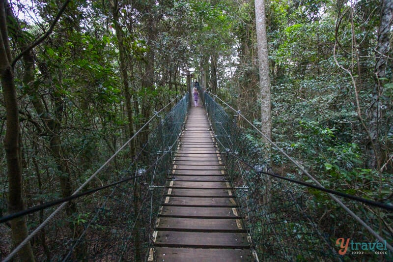 Tree Top Walk at O Reilly's Rainforest Retreat - Gold Coast Hinterland accommodation