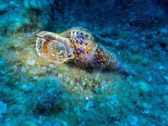 Triton Snail Hero Image