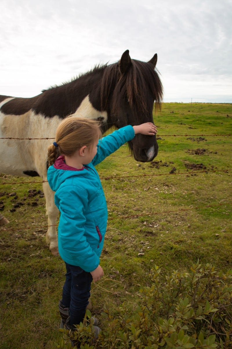 Icelandic Horse - one of the best experiences when visiting Iceland with kids