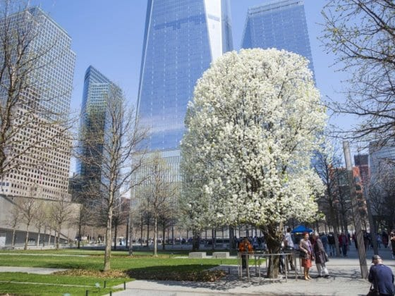 Survivor Tree 911 Memorial