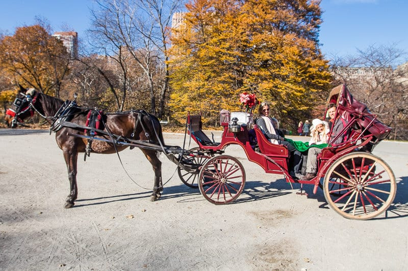 Things to do in NYC with kids - take a horse and carriage ride in Central Park