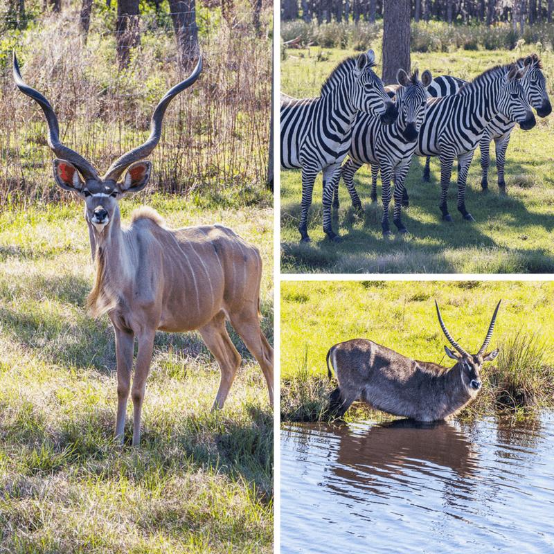 Safari Wilderness in Central Florida