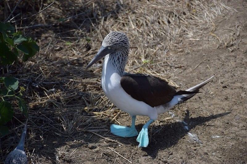 Wildlife on Snorkeling on Isla de la Plata, Ecuador