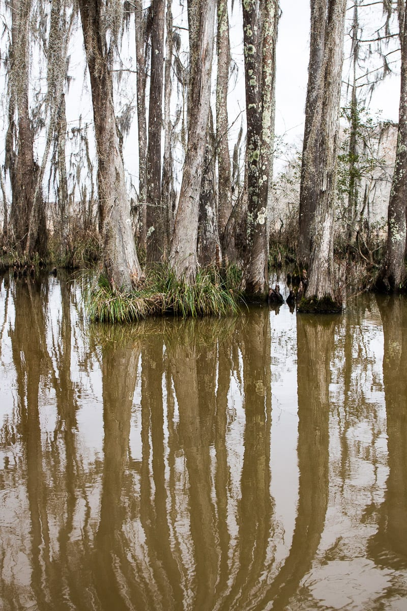 Swamp Tour - one of the best things to do with kids in New Orleans