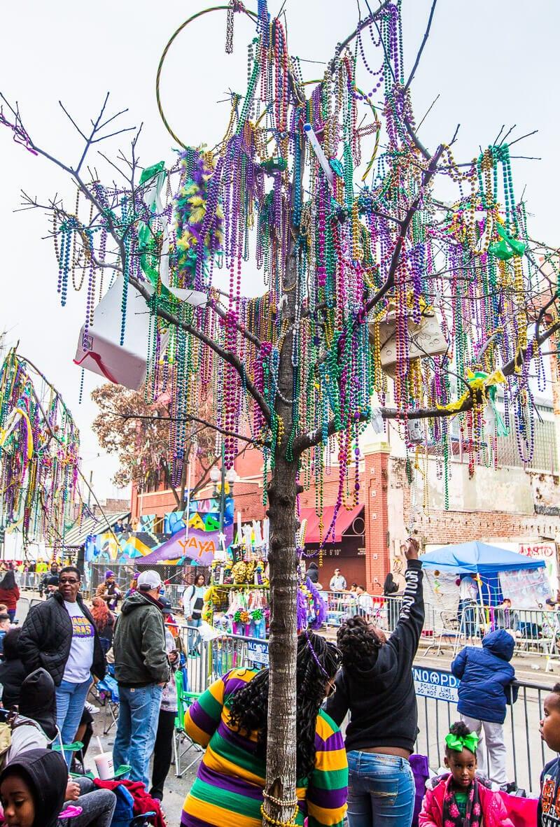 Perles coincées dans les arbres pendant le Mardi Gras à la Nouvelle-Orléans