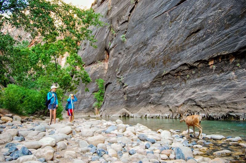 Tips for doing the Zion Narrows hike with kids