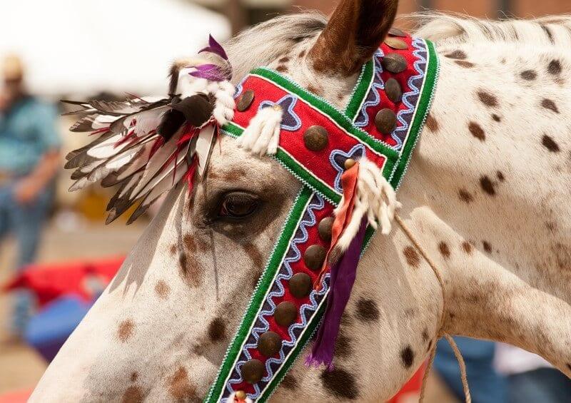 native american indian pow wow Montana
