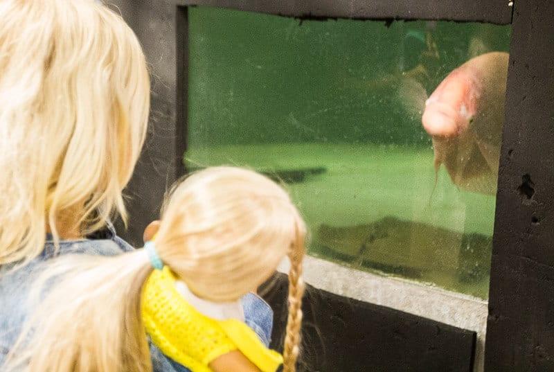 aquarium mall of america