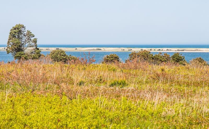 Chappaquiddick Island, le vignoble de Martha