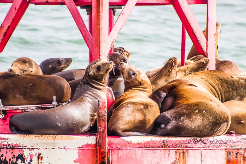 Seals we spotted on the Channel Islands National Park ferry in California