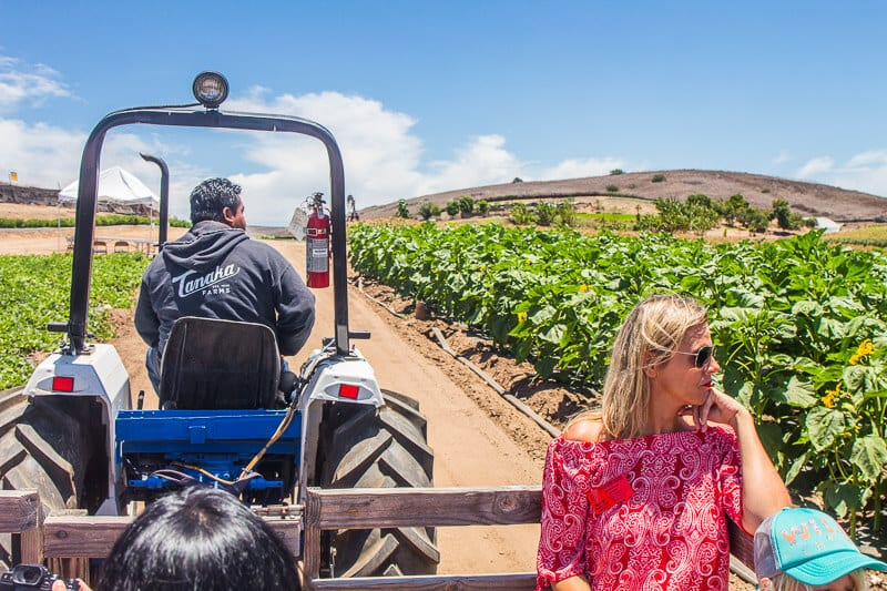 Tanaka Farms Strawberry Tour in Irvine