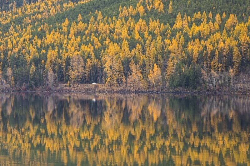 Fall in montana hiking and wildlife viewing (800 x 533)