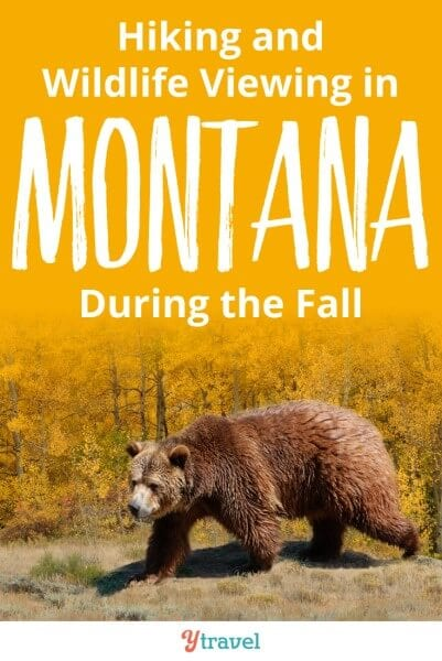 Hiking and wildlife viewing in Montana Fall. Don't miss these 5 places to visit in Montana for your fall hiking and wildlife viewing. Some of these spots, like glacier lakes, underground caves, and fields of bison are some of the best things to do in Montana.