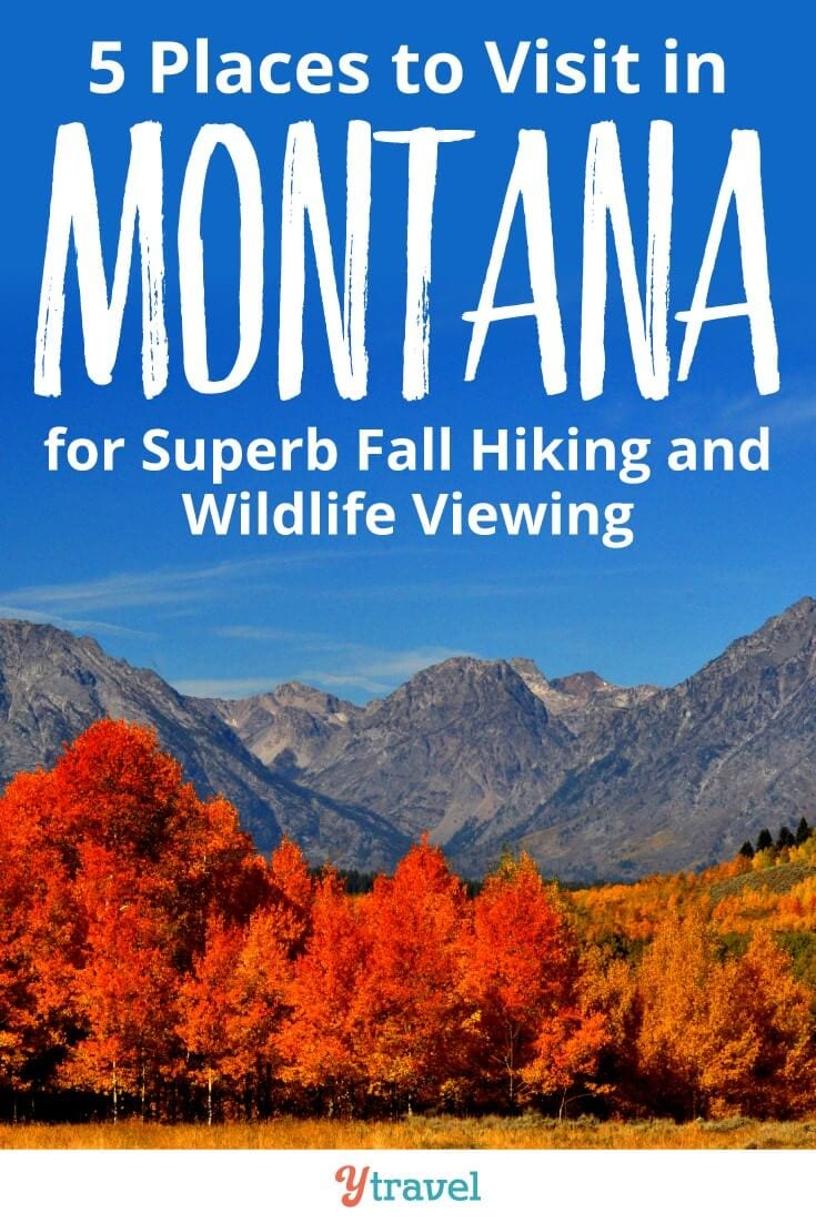 5 places to visit in Montana in the Fall. The spectacular colors of Autumn, the lower temperatures, and reduced crowds makes hiking and wildlife viewing in Montana something special. Click to find the best places to visit in Montana