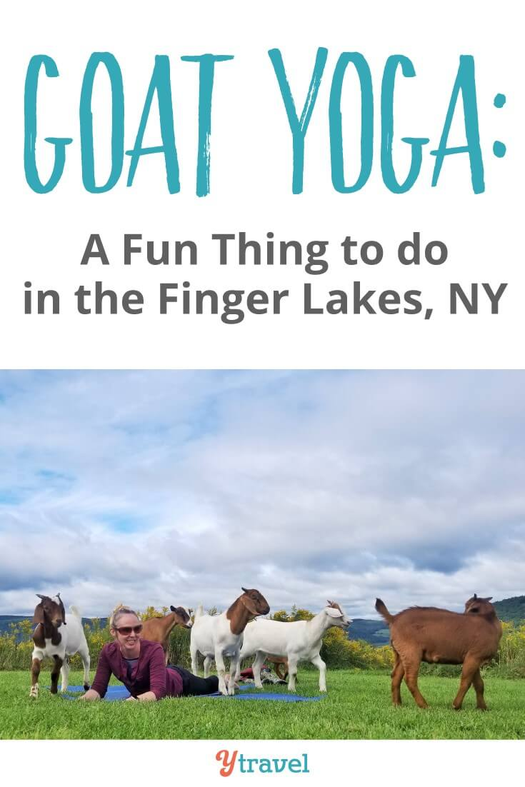 Fun things to do in the Finger Lakes, NY: Goat yoga! Yes you can do yoga with goats. It's joyful, fun and definitely playful. Plus you get gorgeous views over the pretty farmland. Click to read more