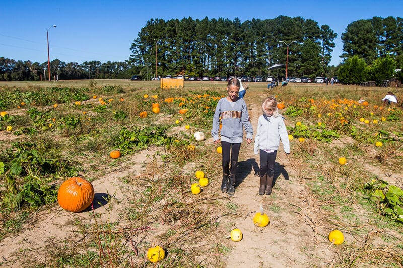 Boyette Family Farm, Clayton, North Carolina