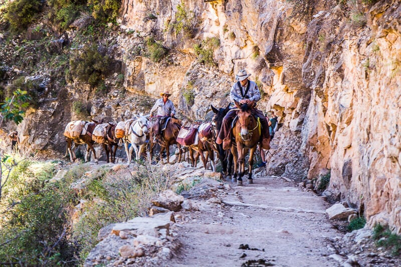 Grand Canyon Mule trips