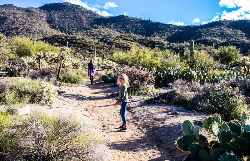East Saguaro National Park