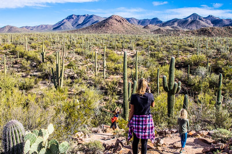 West Saguaro National Park Tucson (2)