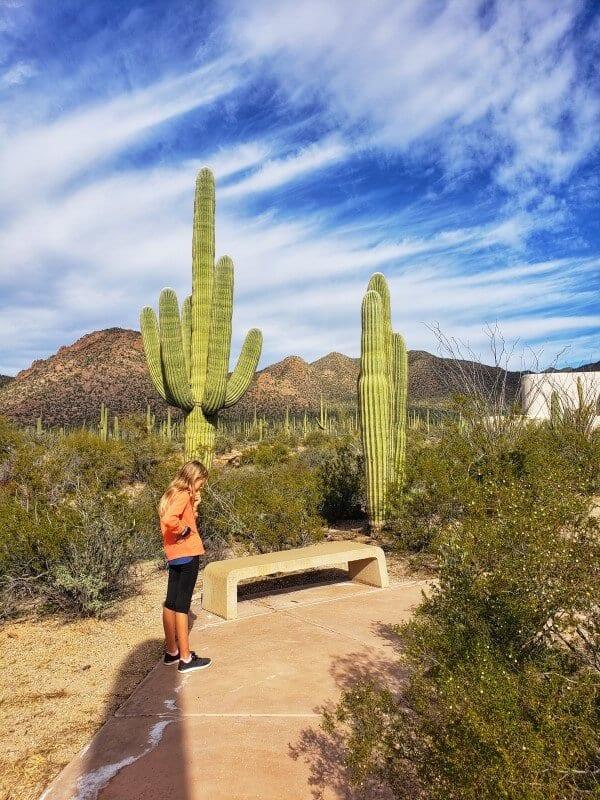 saguaro national park west cactus garden trail