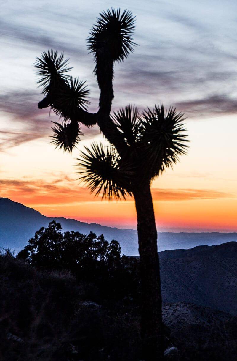 Sunset in Joshua Tree National Park, California