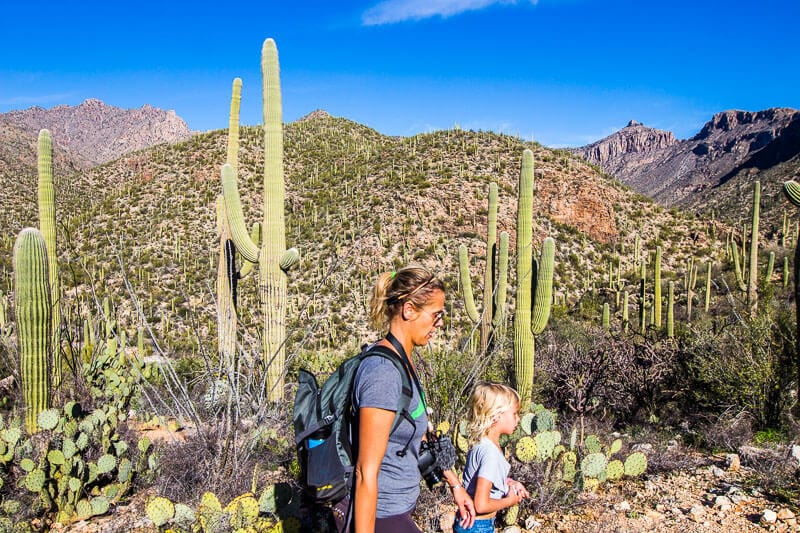 Sabino Canyon hikes