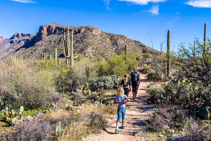Sabino Canyon hiking trails
