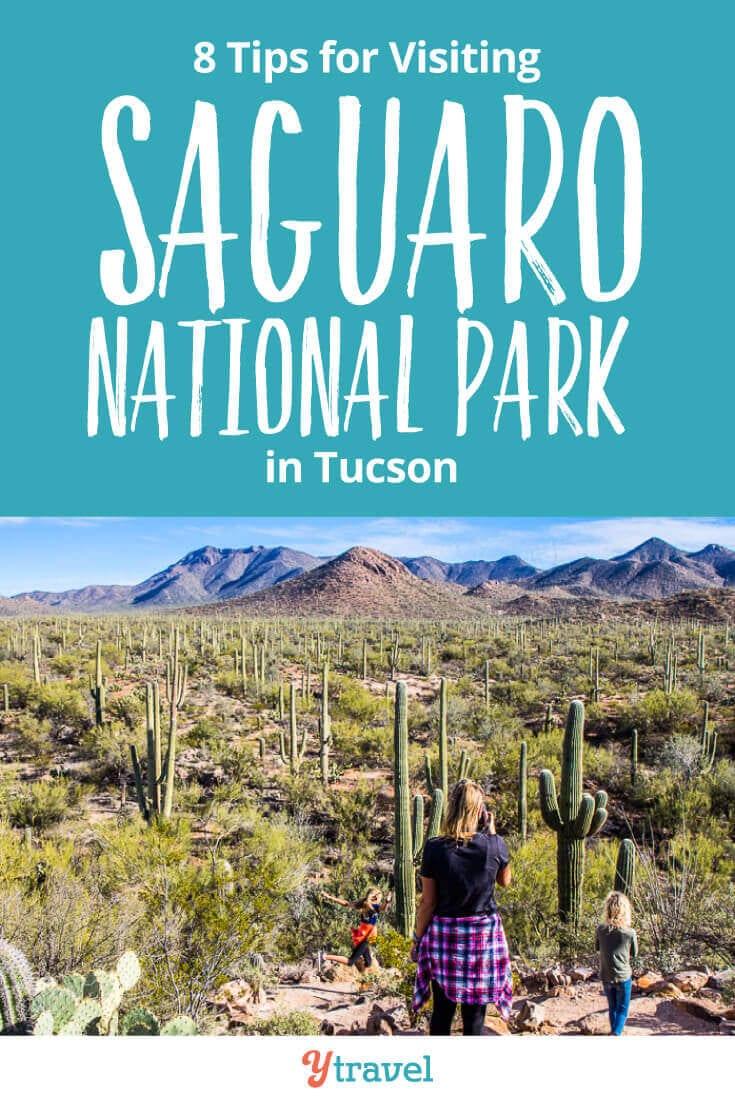 saguaro national park tucson