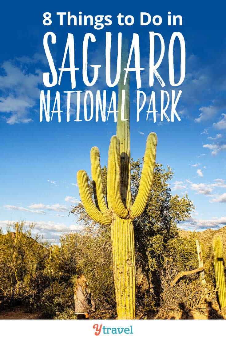 Saguaro National Park - 8 amazing things to do in these National Parks in Tucson. Plus tips on places to stay in Tucson! This National Park in Arizona is one of the best places in the USA to see giant cactus.