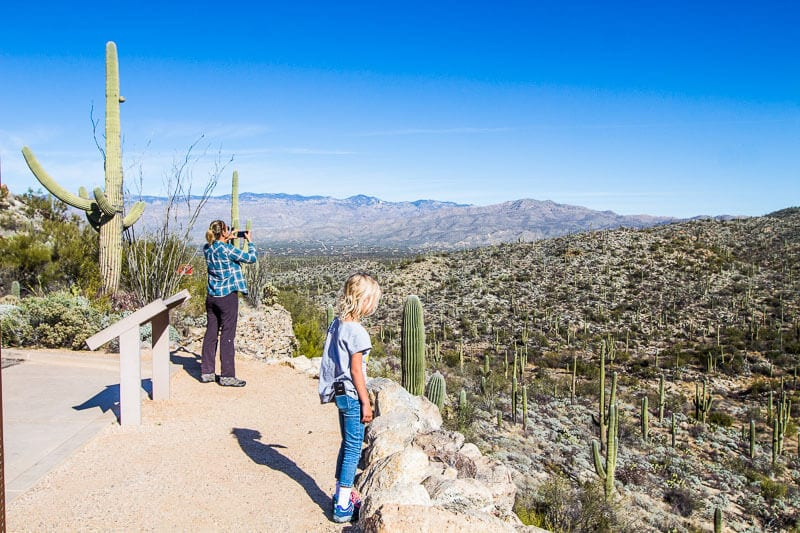 Rincon Mountain Overlook, Saguaro National Park, Tucson